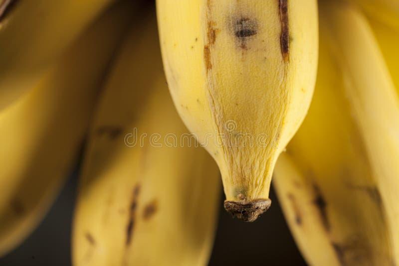 Тайские бананы стоковая фотография
