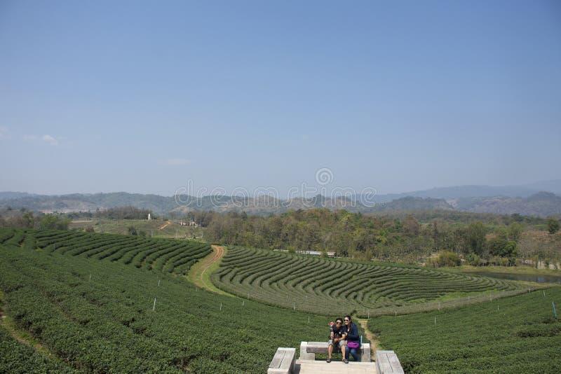 Тайские люди и чужие путешественники посещают перемещение и принимают фото на точка зрения плантации чая Choui Fong в Chiang Rai, стоковое изображение