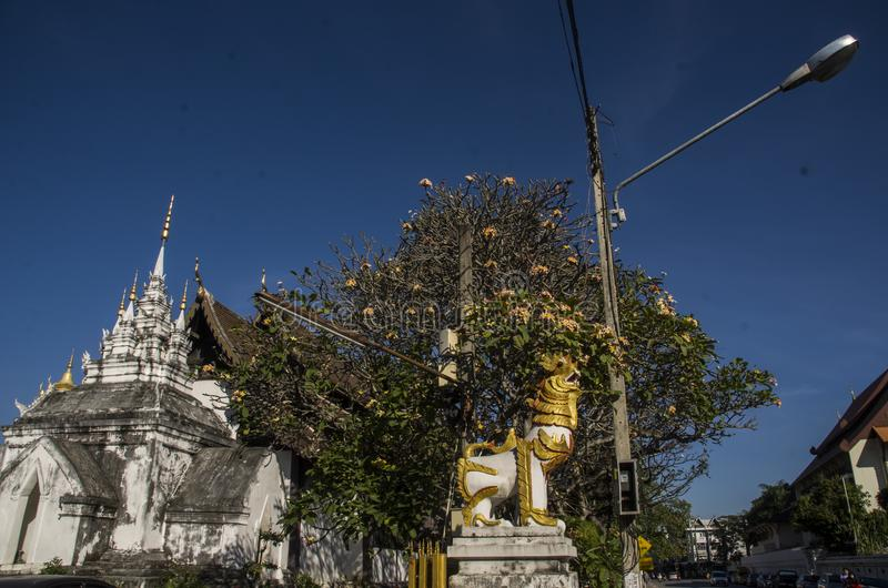 Тайский висок в chiangmai, Таиланде стоковое изображение rf
