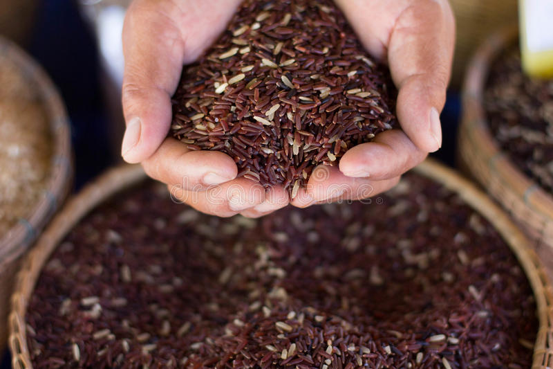 Тайский рис риса/Jusmine Jusmine/Hawm Мали/рис Riceberry стоковая фотография