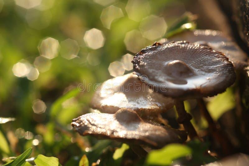 Тайский экзотический гриб стоковая фотография rf