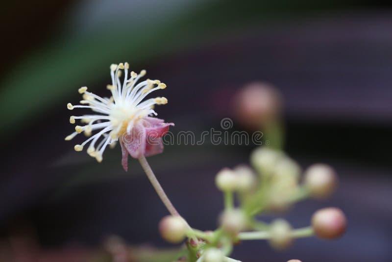 Тайский экзотический цветок стоковое изображение rf