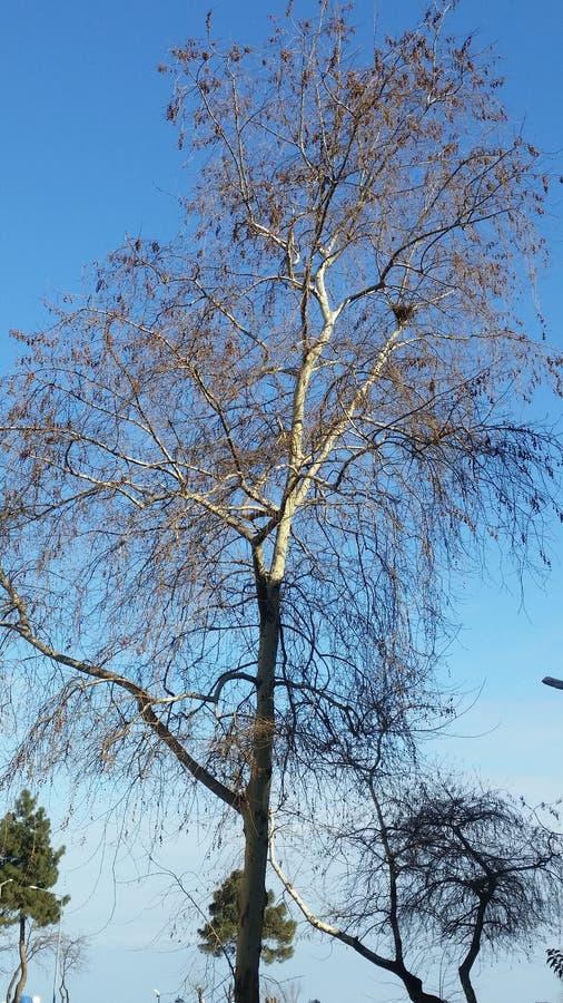Такая же зима дерева любит ждать что-то стоковое изображение rf