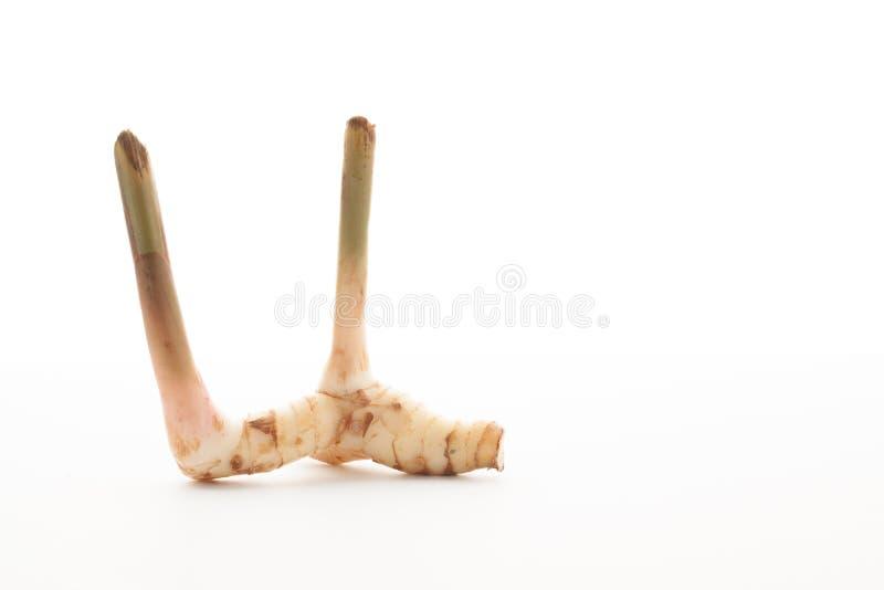 также как имбиря еды флейвора предпосылки specice запаха kung s kai ингридиентов различного galangal важное такая тайская белизна стоковое фото rf