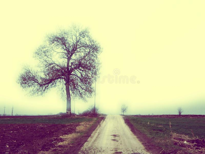 Такое же дерево, такая же дорога стоковое фото rf