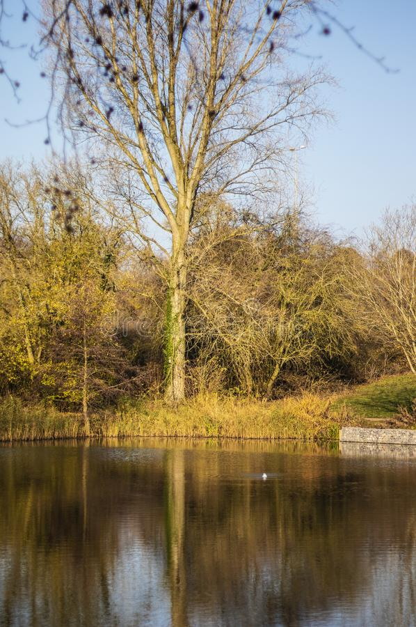 Такса Wootton озера юбилей королевская в Уилтшире стоковая фотография