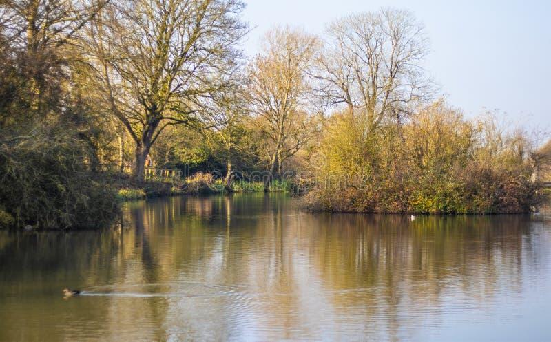 Такса Wootton озера юбилей королевская в Уилтшире стоковые изображения rf