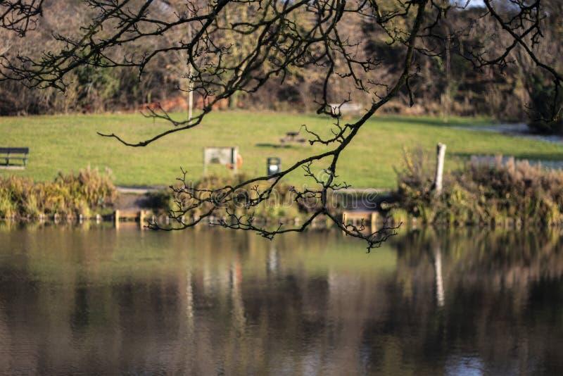 Такса Wootton озера юбилей королевская в Уилтшире стоковое изображение rf