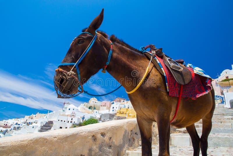 Такси осла в Santorini, Греции стоковое фото