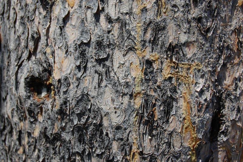 Тактильная серая кора дерева, текстурированная, естественная грубая поверхность стоковое изображение rf