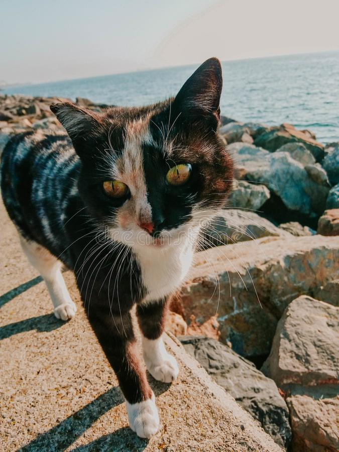 Так мило, сладкая черная котенка стоковые фото