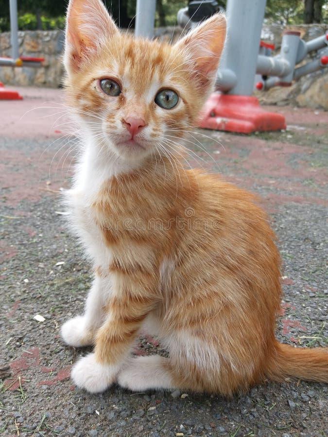 Так мило сладко-желтый котенок стоковая фотография
