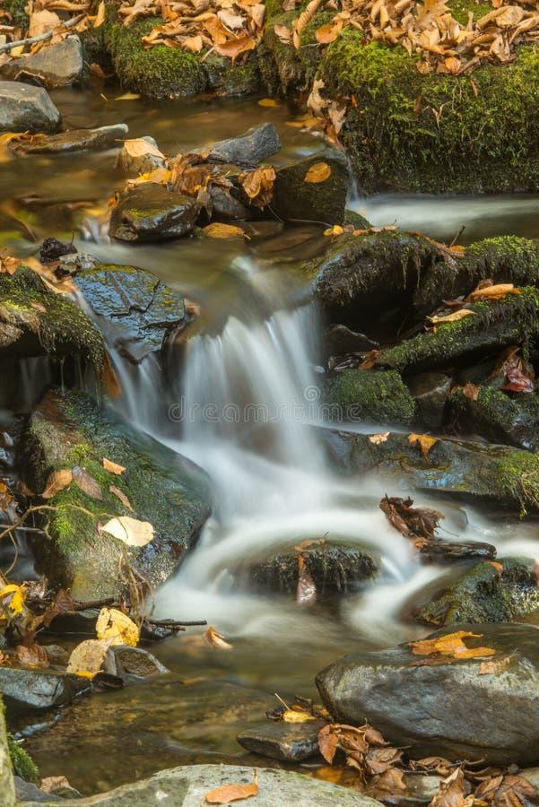 Танец вод жизни стоковые фотографии rf