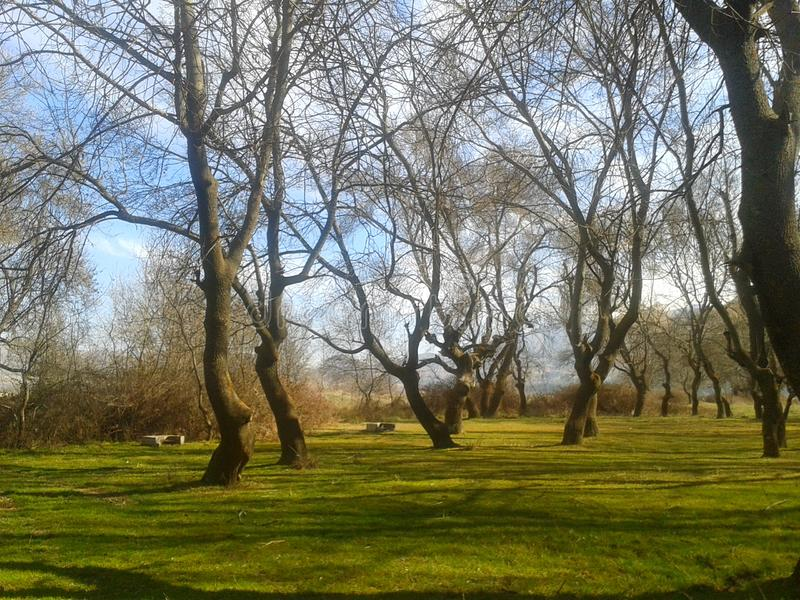 Танец деревьев стоковое фото