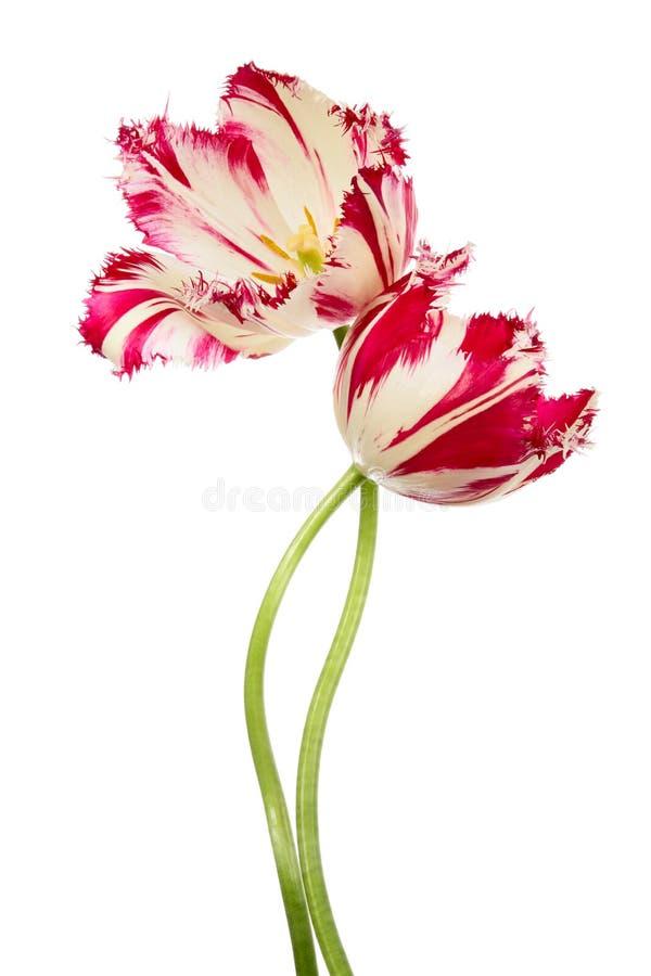 Танцулька цветков стоковые изображения rf