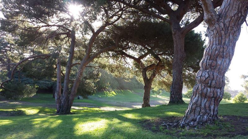 Танцы Солнця в деревьях стоковое изображение rf