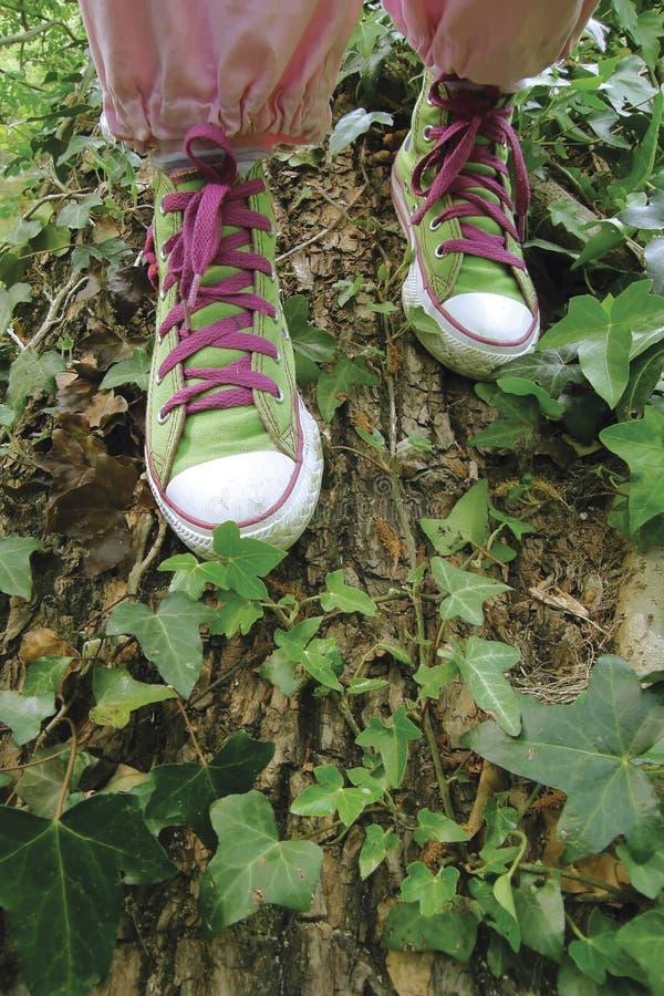 Тапки, теннисная обувь стоковые фотографии rf