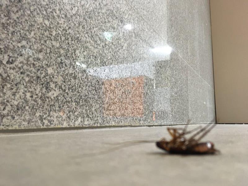 Тараканы мертвые на бетоне пола в офисе стоковые фото