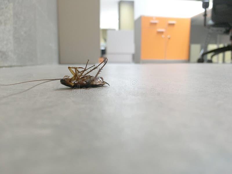 Тараканы мертвые на бетоне пола в офисе стоковое изображение rf