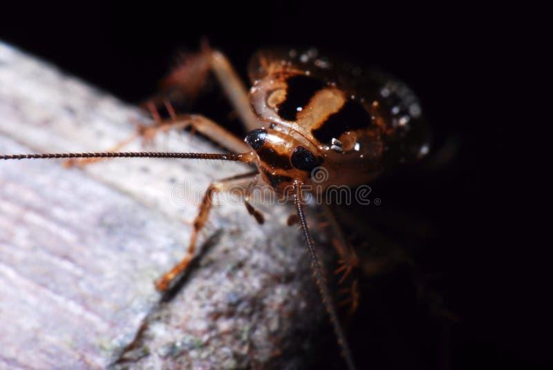 Таракан вытекая от угла стоковые изображения rf