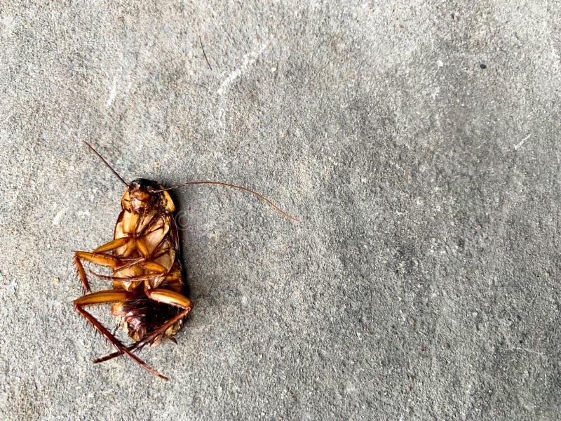 Таракан как раз умирает перед домом стоковые фото