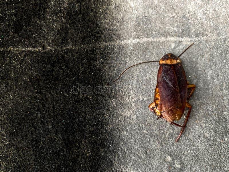 Таракан как раз умирает перед домом стоковые фотографии rf