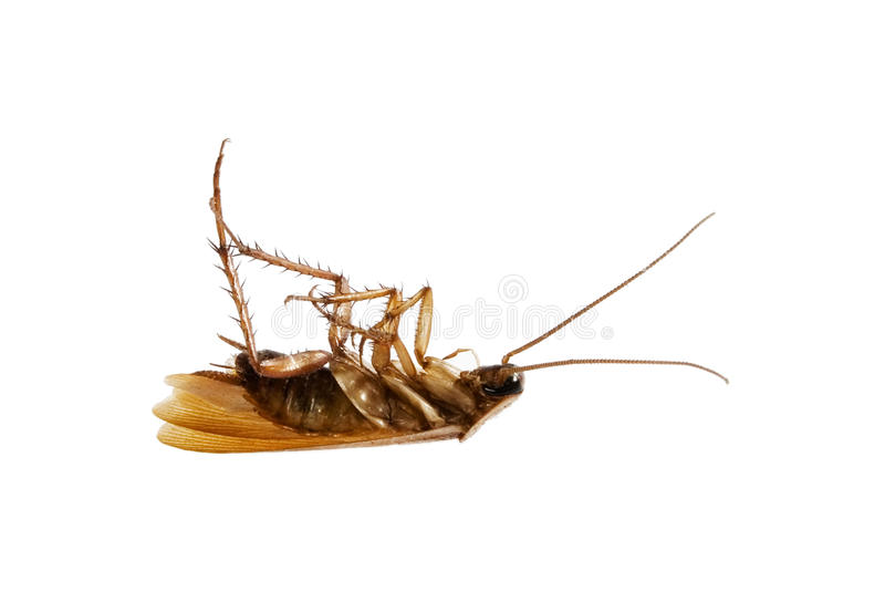 таракан мертвый стоковое изображение