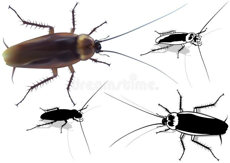 таракан иллюстрация вектора