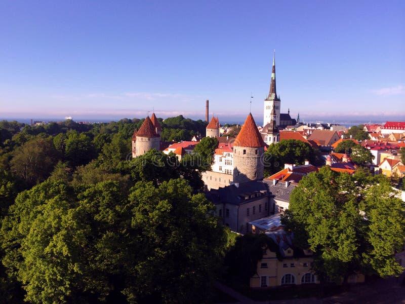 Таллин, столица Эстонии Взгляд от старого верхнего города к красным крышам старого городка стоковая фотография rf