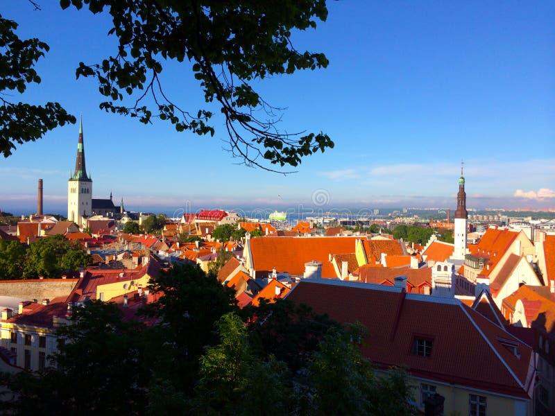 Таллин, столица Эстонии Взгляд от старого верхнего города к красным крышам старого городка стоковые фото