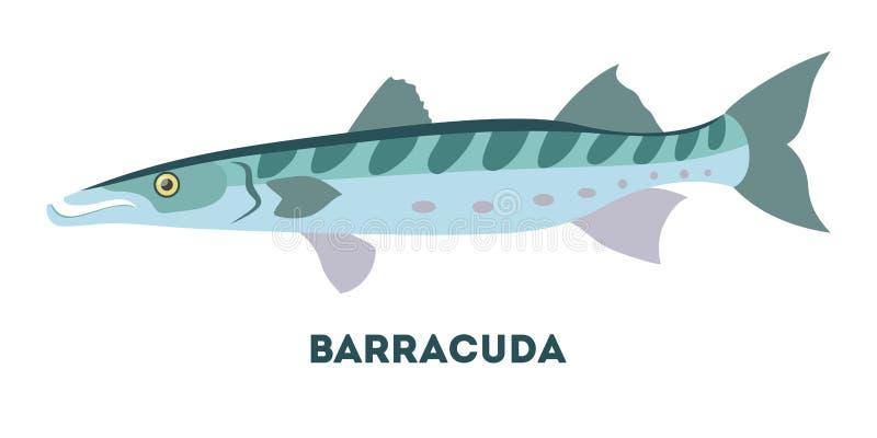 Тварь барракуды морская Рыбы от океана бесплатная иллюстрация