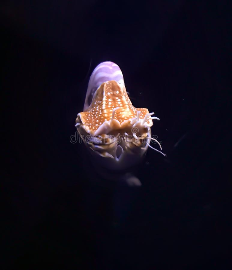 Тварь моря стоковое фото