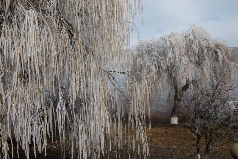 Твердое обледенение, замороженный пейзаж страны чудес зимы дерева Предпосылка тумана и тумана, естественное дерево замороженные л стоковые изображения rf