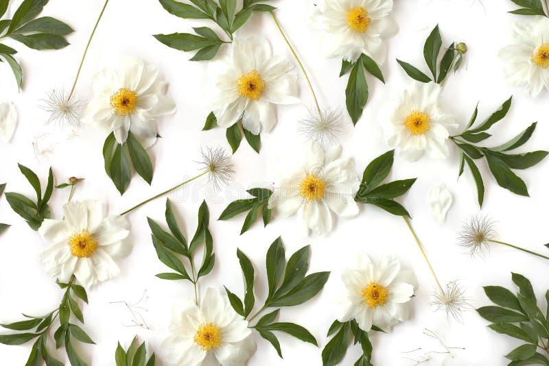 Творческая квартира расположения кладет цветочный узор сделанный белого пиона стоковое изображение