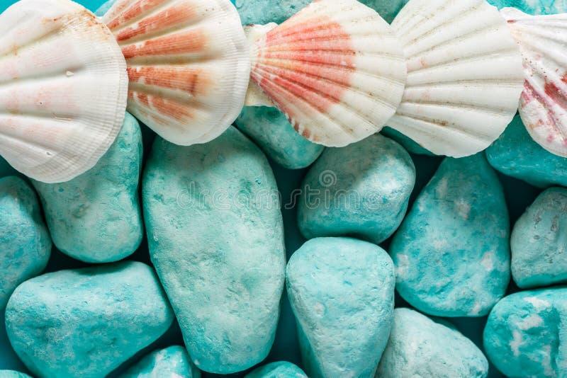 Творческая морская предпосылка Голубые камни вокруг белых и розовых раковин моря Красивый фон природы в пастельных цветах o стоковые фото