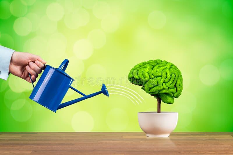 Творческие способности и рост функции мозга стоковые изображения rf