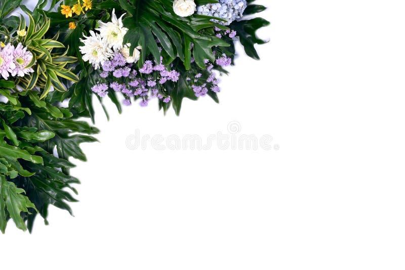 Творческий план сделанный из красочных тропических листьев на белой предпосылке Концепция минимального лета экзотическая с космос стоковое изображение
