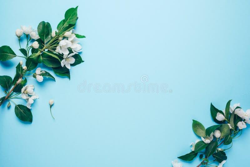Творческий план с зацветая яблоней на голубой предпосылке Плоское положение Концепция - минимализм весны стоковая фотография