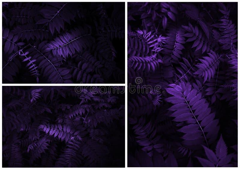 Творческий троповый пурпур выходит план стоковое фото rf