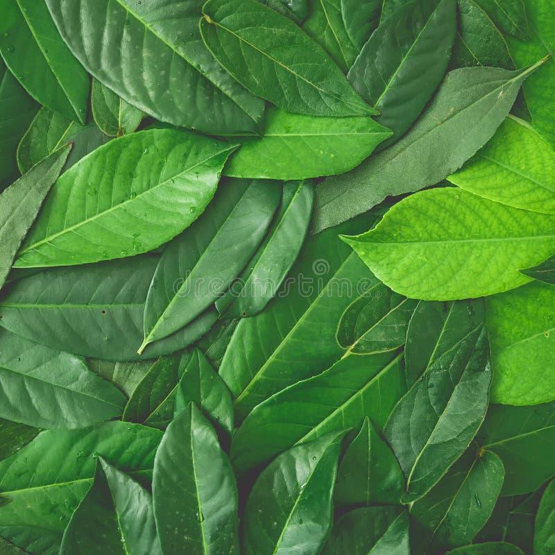 Творческий цветочный узор сделанный из зеленых листьев Плоское положение Взгляд сверху стоковые фотографии rf