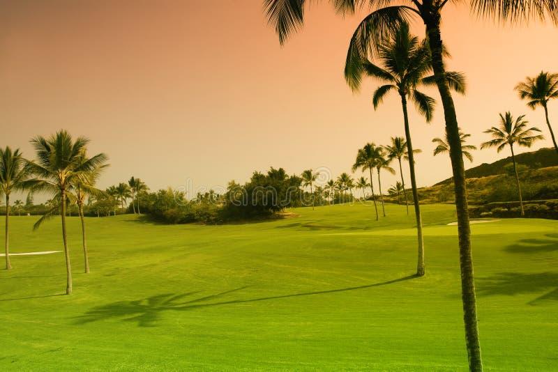 теките гольф стоковые фотографии rf