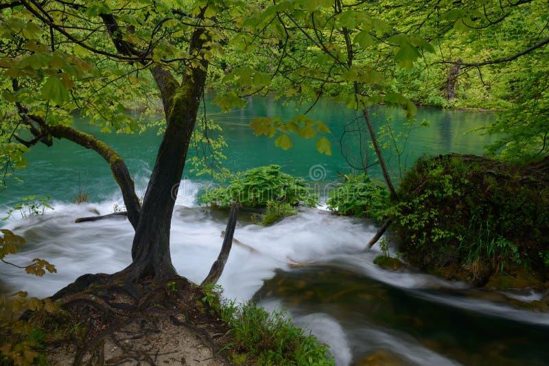 Теките падать к парк лазурному озеру - озерам Plitvice стоковые фото