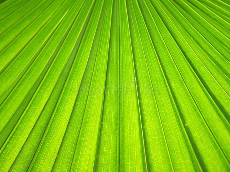 текстура ладони листьев предпосылки зеленая стоковое фото