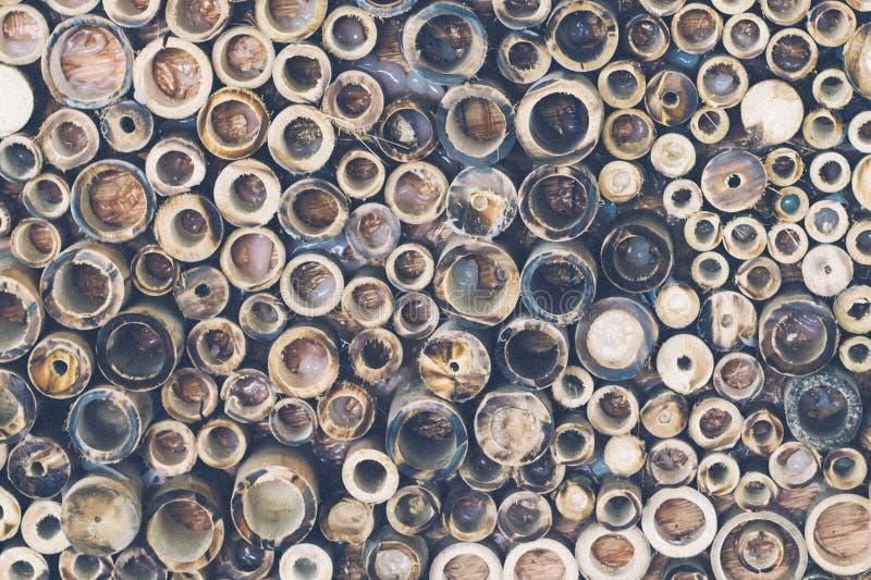 Текстура бамбукового поперечного сечения круга состоя из текстурировала предпосылку концепции стоковая фотография rf