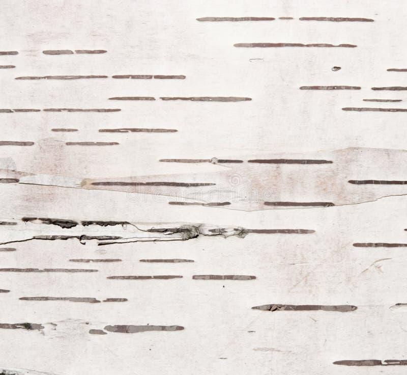 текстура березы расшивы стоковая фотография rf