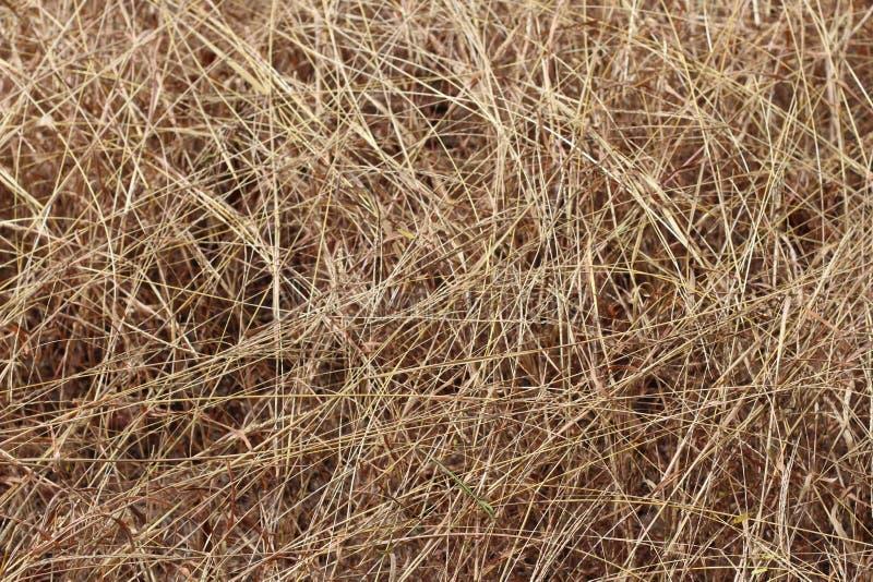 Текстура вянуть травы, предпосылки сухой травы стоковые фото