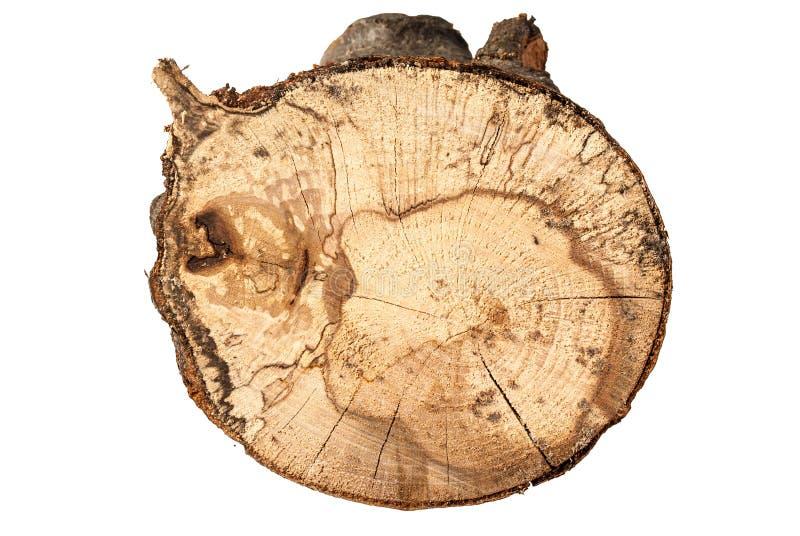 Текстура дерева и пня бука изолированных на белой предпосылке стоковые фотографии rf