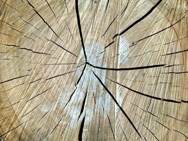 Текстура дерева отрезка стоковое фото
