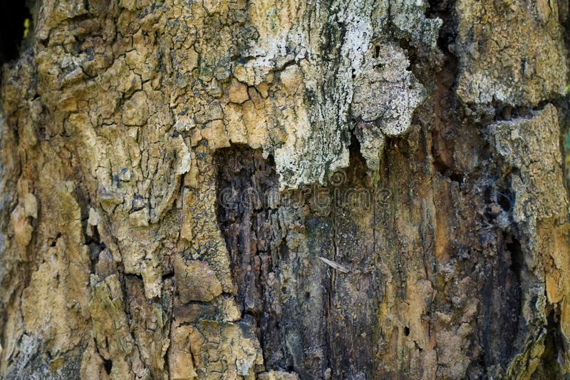 Текстура детали ствола дерева как естественная предпосылка Обои текстуры дерева расшивы стоковые изображения
