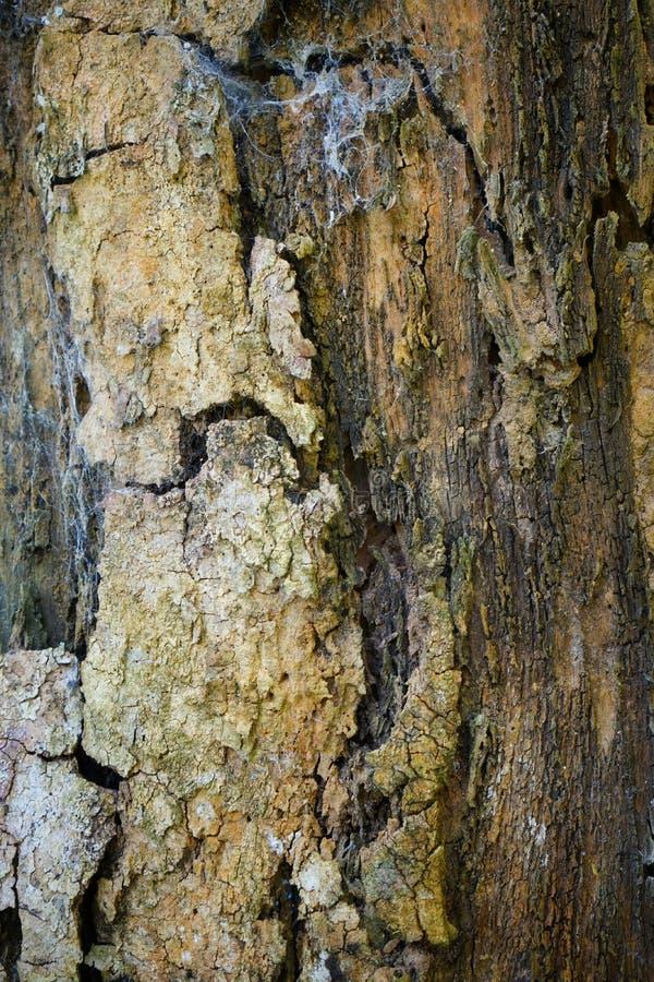 Текстура детали ствола дерева как естественная предпосылка Обои текстуры дерева расшивы стоковое фото rf
